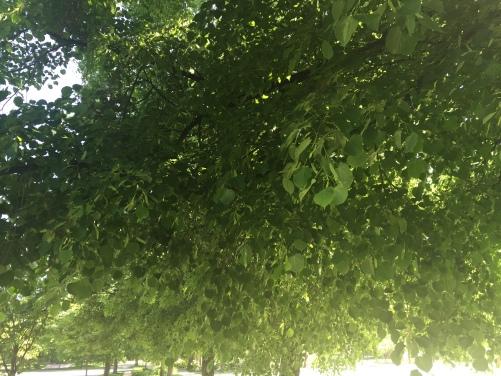 Green: the Beginning of Summer
