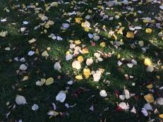 Salt Lake City Fall