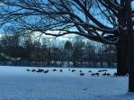 Boston Area. Jan 2015