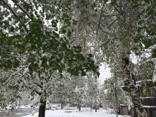 Snow in April :p